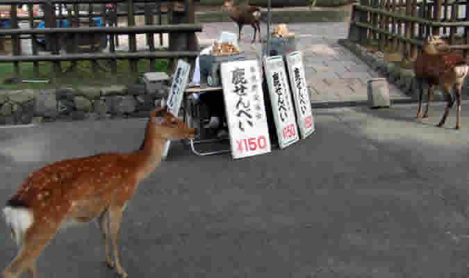 奈良県のパワースポット